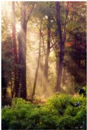 DennisChunga - Morning Fog