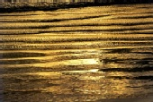 donde - Ocean of gold