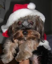 Lizzie - my Dog