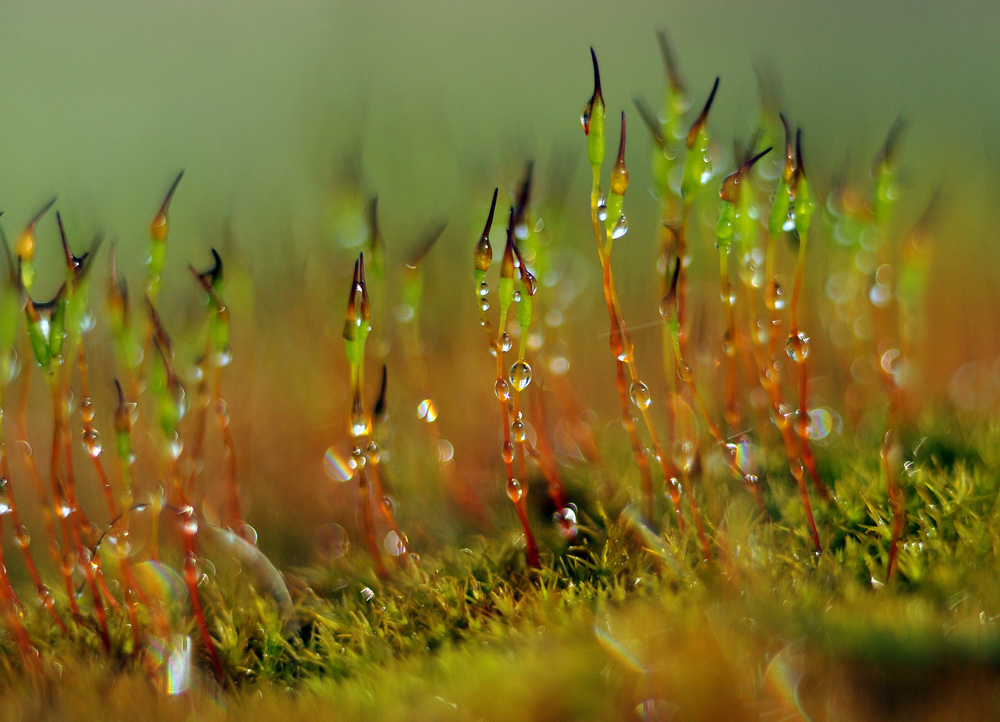 Backstreet Photography - macro moss