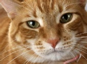 Rebecca Ruadh - Buster, my cat