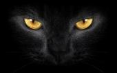 Dick Hefmen - Black Cat Eyes