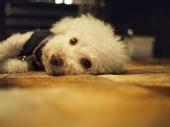 Leo Long - Happy Dog